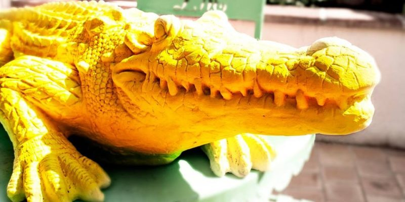 Les Crocodiles Jaunes